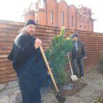 В Мелитополе высадили крымские сосны.